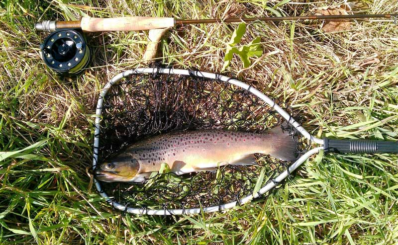 Trout catched with fly reel